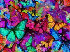 Cazar mariposas transforma la cultura de la empresa